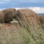Ramino-Karoo-Guest-Farm-101
