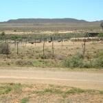 Ramino-Karoo-Guest-Farm-2-600x450