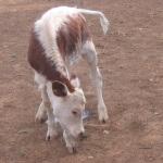 Ramino-Karoo-Guest-Farm-201