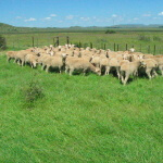 Ramino-Karoo-Guest-Farm-221
