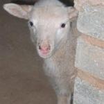 Ramino-Karoo-Guest-Farm-301-225x300