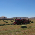Ramino-Karoo-Guest-Farm-31