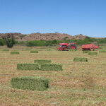 Ramino-Karoo-Guest-Farm-32