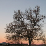 Ramino-Karoo-Guest-Farm-331