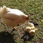 Ramino-Karoo-Guest-Farm-561-600x450