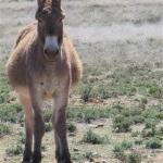 Ramino-Karoo-Guest-Farm-60